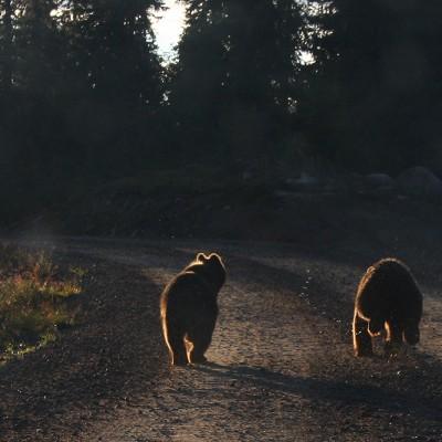 Två björnungar